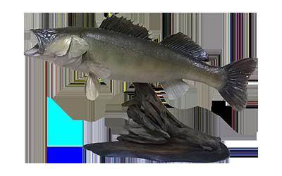 ⊰ Чучела рыб ⊱