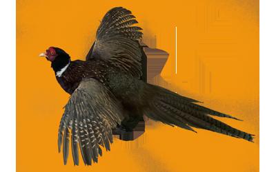 ⊰ Чучела птиц ⊱